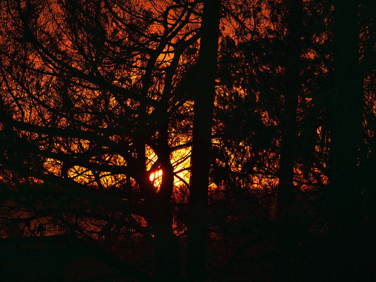 This is a sunset through the trees looking out towards Cape San Blas